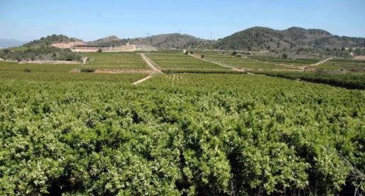 Nou enfrontament amb l'Ajuntament de Riba-roja